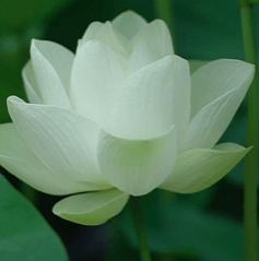 <!--:en-->THE LOTUS<!--:--><!--:th-->Hello world!<!--:-->